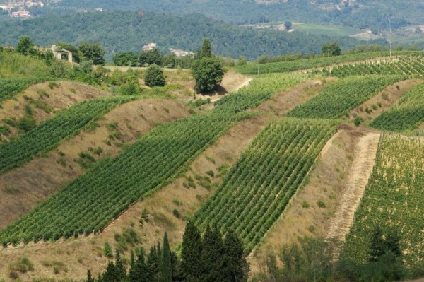 Badia a Coltibuono vineyard at Monti